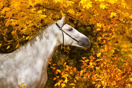Kůň v podzimní přírodě