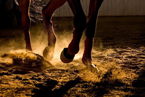 Koňská kopyta