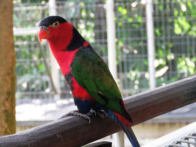 roztomilý ptáček